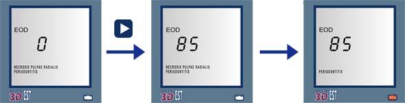EndoEst-3d